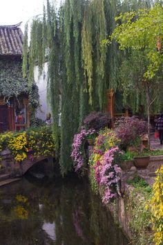 willows, cottage gardens, weeping willow, purple flowers, sports, garden furniture, place, adventure travel, china