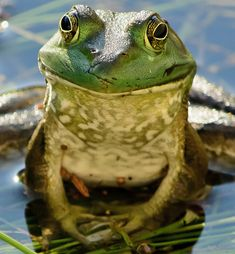 One more frog