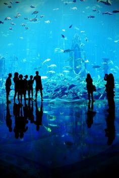 """The Atlantis"""