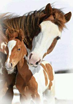 mare, beauti hors, anim, mothers, horses