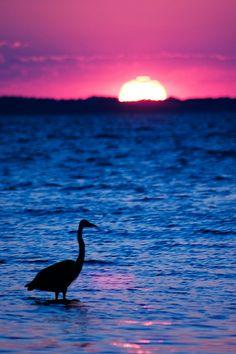 Duck Crane - Kitty Hawk, North Carolina