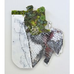 """Ivan Stojakovic Green Map 2, 20"""" x 22"""", 3"""", mixed media, live succulent plants and deconstructed composite panel, 2014"""