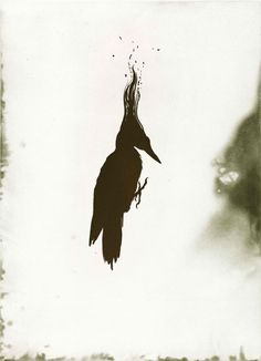 Darren Waterston   A Compendium of Creatures graphics