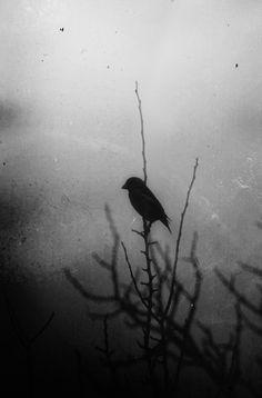 ♂ Solitude Photo by Tsvetelina Todorova