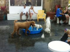 Camera Roll Call: Pups playing at Yappy Hour to benefit Kids and Canines!