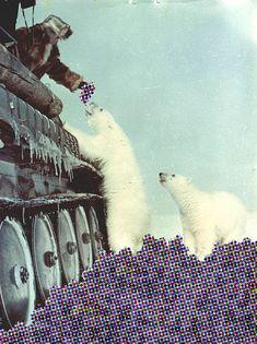 Collage by @Marina Zlochin Zlochin Zlochin Zlochin Molares #animal #collage #vintage #fun #bear #bears #polar