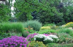 Tips for designing a perennial meadow