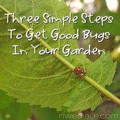 Three Simple Steps To Bring Beneficial Insects To Your Garden | NW Edible Life
