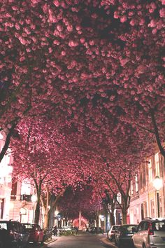 infamousgod:   Cherry Blossom Avenue by Marcel Bednarz