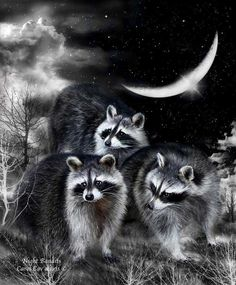 Three masked raccoons Are surely up to mischief In the glow of the crescent moon.