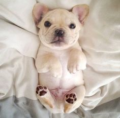This little pup has the right idea...dreamin'