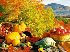 Fall Harvest wallpaper download from our ...