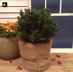 Wrap your outdoor planters in bubble wrap and burlap to keep them warm this winter. #Vine #lowesfixinsix