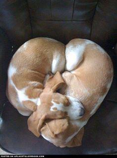 Two Pups Cuddling