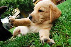 Puppies puppies pupppieesss