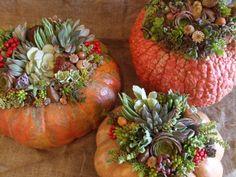 Pumpkins ...planted ...Laura Eubanks