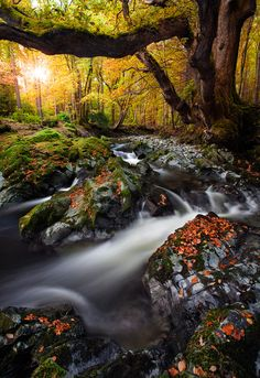 Tollymore Forest, Ireland