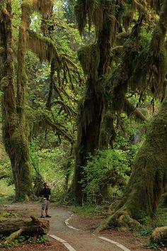 Hall of Mosses, Hoh Rain Forest, Olympic National Park, Washington