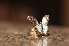 bling, fashion, jewelri box, style, butterflies, accessori, jewleri, butterfli ring, thing