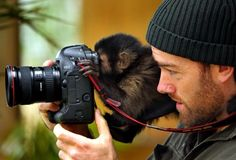 How cute is this! animal pictures, monkeys, funni, taking pictures, slr cameras, curious george, animal photos, thing, photographi