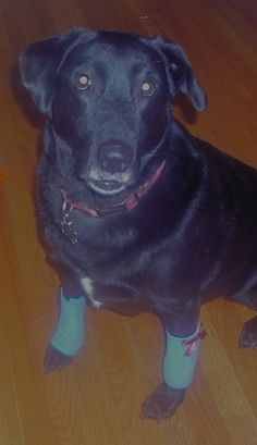 Yes these are crazy but if your dog chews at their legs (like mine does) then these would TOTALLY help.  How to make dog leg warmers