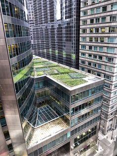 rooftop garden, Chicago