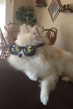 Futures so bright gotta wear shades on Pinterest   27 Pins