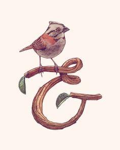 Bird & (Ampersand)