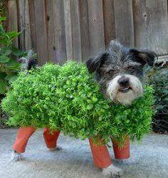 Chia Pet Dog Costume   AllFreeHolidayCrafts.com