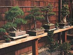 how to build a bonsai bench