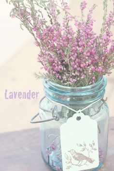 lavender...   Aline ♥