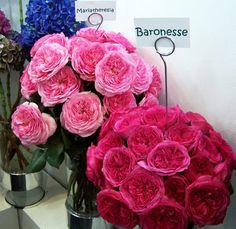 garden roses <3