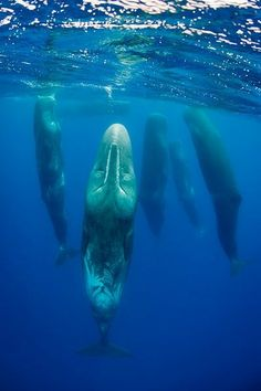 Sleeping whales by Magnus Lundgren.