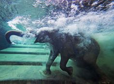 The week's best photojournalism - The Week An elephant immerses itself in an indoor pool at Leipzig, Germany's zoo.