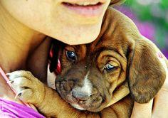 futur pet, puppies, pet photography, pet portraits, pet photographi