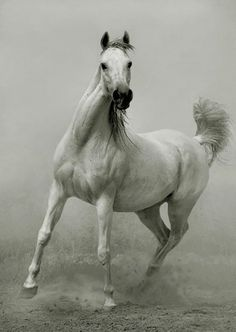 Photographer Wojtek Kwiatkowski   horses {Part 2}