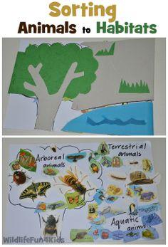 Sorting Animals to Habitats | Wildlife Fun 4 Kids