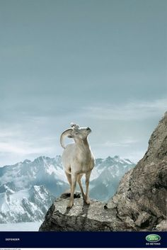 landrover goat Land Rover Defender Ad: Aiming High?