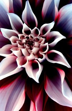 Flower #petals