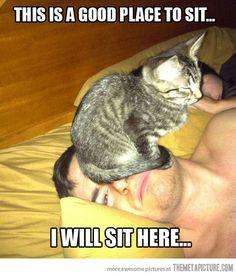 cats, kitten, anim, laugh, giggl