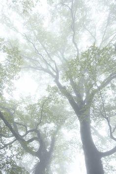 fog, leav, trees, forest, allow natur, mornings