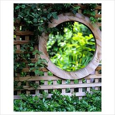 Circular opening in lattice fence - GAP Photos - Specialising in horticultural photography