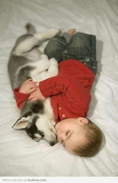 via Cute Pictures Archive Page: 5 - GoAww.com : enchantedtigress nap time, anim, dogs, friends, pet, siberian huskies, babi, puppi, kid