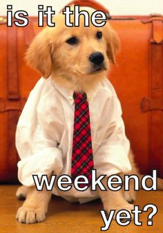 Is it the weekend yet? #dog