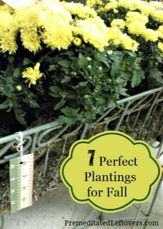 7 flowers to plant in the fall - some color for now and bulbs for the spring.