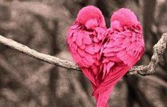 Lovebirds!
