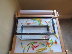 Gummy worm science by Teach Preschool