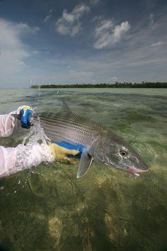 Islamorada bonefish