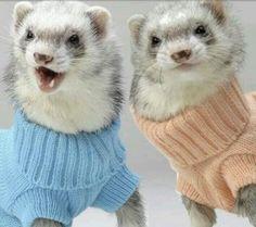 Ferrets in turtle neck sweaters