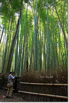 Arashiyama, Kyoto, Japan.Photo By Vicki Li
